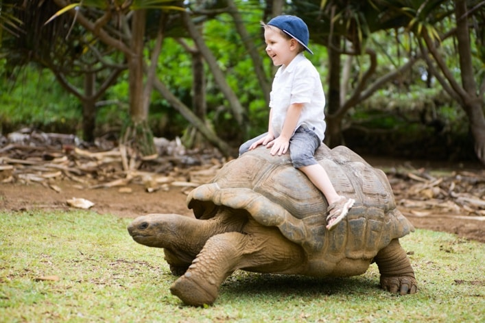 Child on tortoise