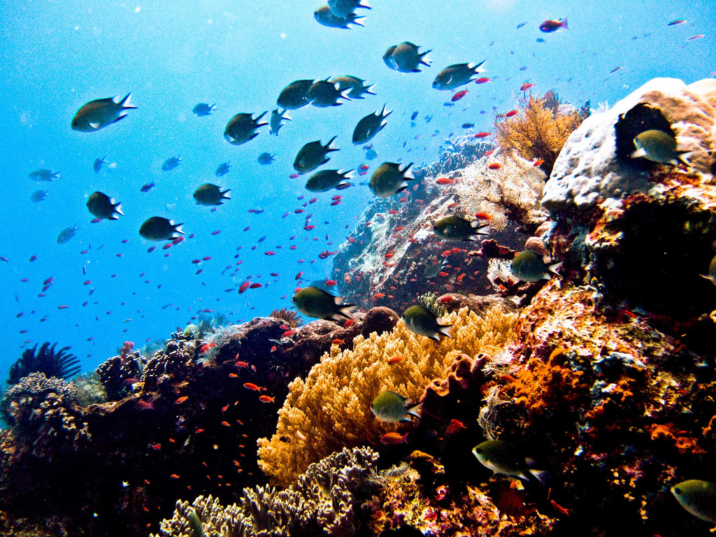 fish diversity when diving in indonesia