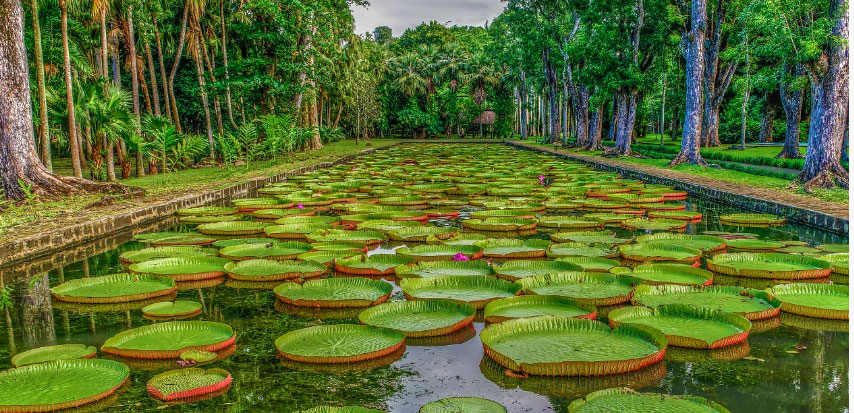 Explore the Majestic Botanical Garden in Mauritius | Sun Resorts